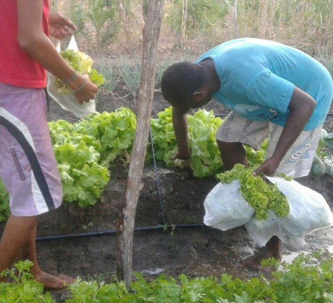 farmprojekt-salvatorianer-brasilien-ernte