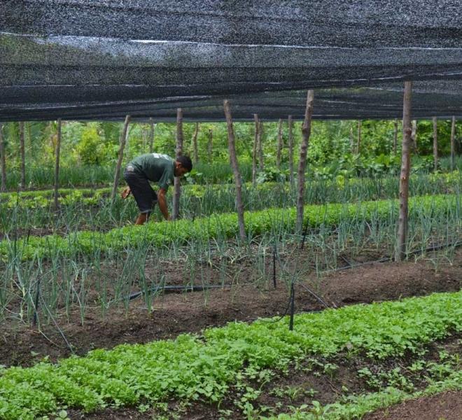 Bewässerte Gemüsefelder versorgen 40 arme Bauern in Brasilien