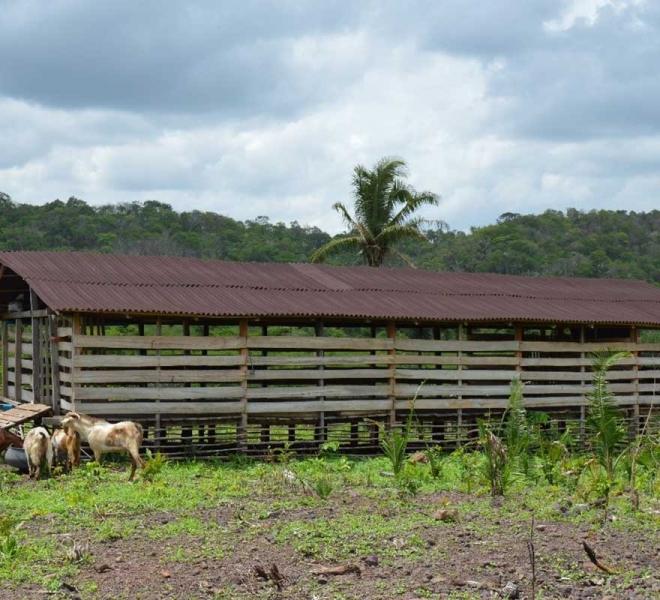 Ziegenzucht als Income-Generating-Projekt der Salvatorianer in Brasilien